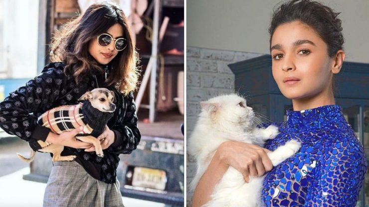 Top 10 Pet Shops in Mumbai, Dog Shops in Mumbai