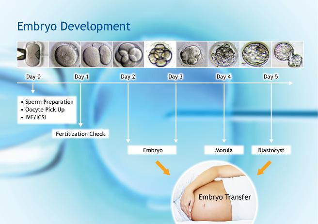 Top 6 factors affecting male fertility