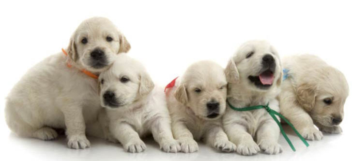 Top 10 Pet Shops in Delhi, Delhi NCR