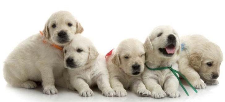 Top 10 Pet Shops in Delhi, Delhi NCR
