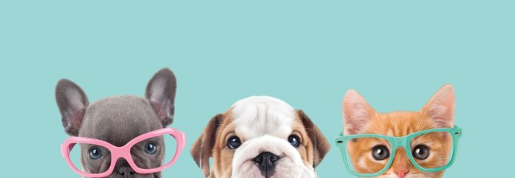 Top 10 Pets Shops in Chandigarh